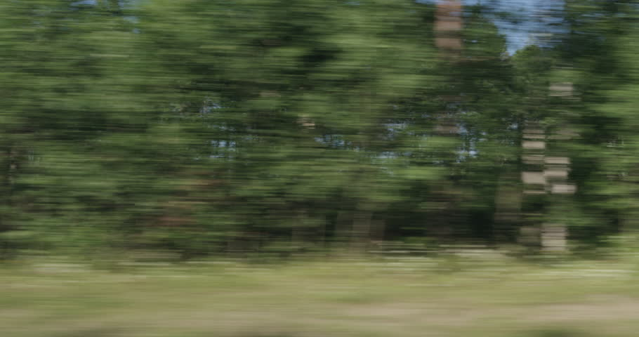 Driving plate green mixed forest on summer sunny day side view from fast moving car