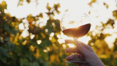 The sun shines beautifully through a glass of red wine. Hand holds a glass against the vineyard background