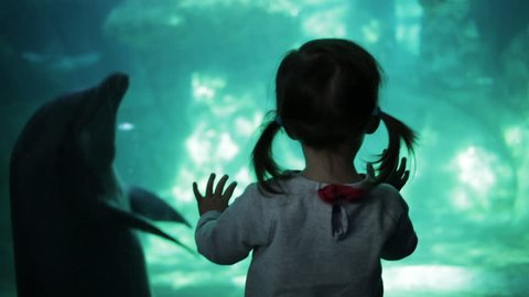 Little Girl in Pigtails Looking at Dolphins in Aquarium
