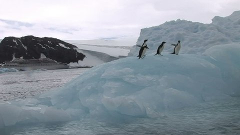 Adelie Penguins sitting on an Antarctic Iceberg in Hope Bay