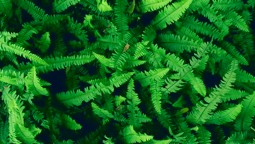 Wind Green Fern Plant Background and texture