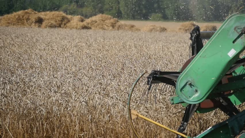 Harvester machine collect golden wheat .  Reel closeup slow motion