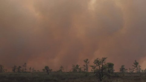 Forest in Fire, Burning Trees, Bushs, Burning Dry Grass in the Peatbog.