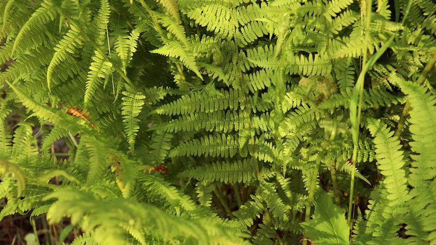 Natural fern leaf, fern leaf pattern. Green foliage with leaves ferns