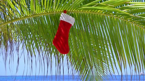 Christmas stocking hanging on coconut palm tree leaf at tropical sandy beach.