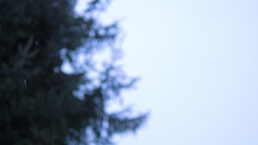Blured closeup christmas tree branch in winter park. Snowfall on pine branch. Shot filmed in 4k UHD | Shutterstock HD Video #1017130309