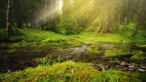 A relaxing shot of a stream running along the forest landscape with sun rays beaming through the tres.