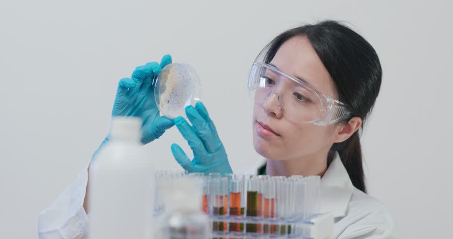 Scientist making observation at petri dish