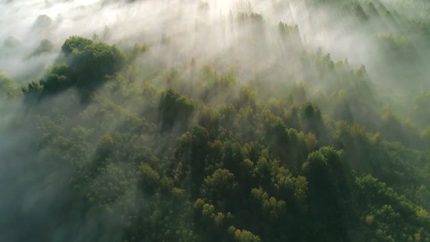 Forest covered with morning fog at sunrise aerial shot | Shutterstock HD Video #1017439609