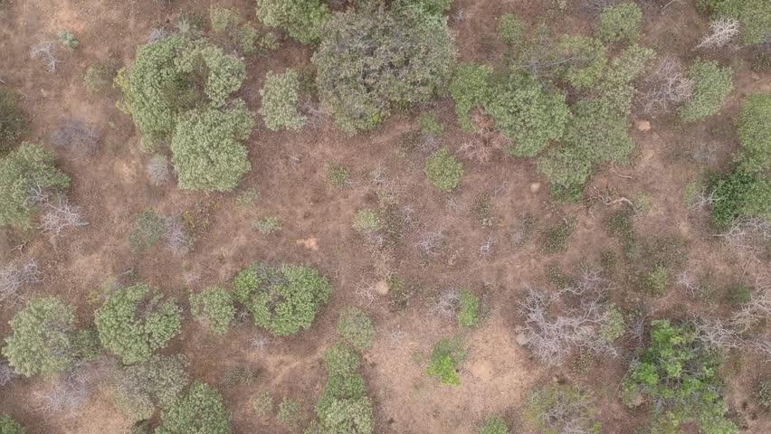 aerial Brazilian cerrado
