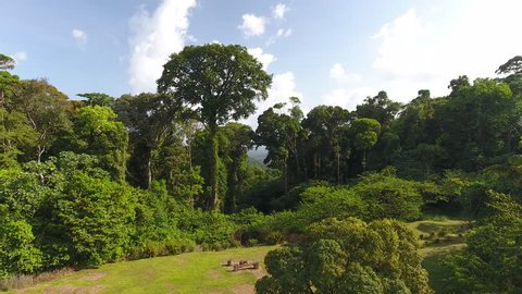 Drone hot flying between giant trees in French Guiana amazonian forest.