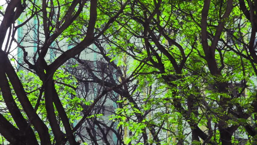 Brazil,  São Paulo - 03 October 2015,   Trees contrast the environment, through logs. | Shutterstock HD Video #1017740779