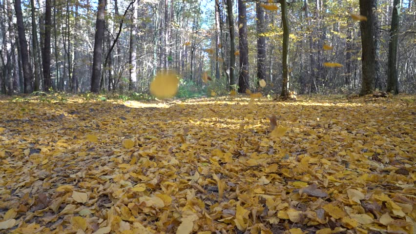 Autumn leaves falling in slow motion and sun shining through fall leaves. Beautiful landscape background. Autumn colorful forest | Shutterstock HD Video #1018190179
