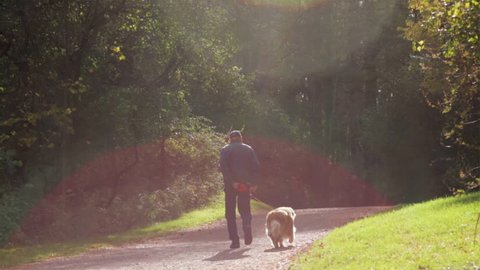 Old man walking a dog down a forest path in the fall close to sunset with lens flares. Dog on a leash walking with owner in the woods.