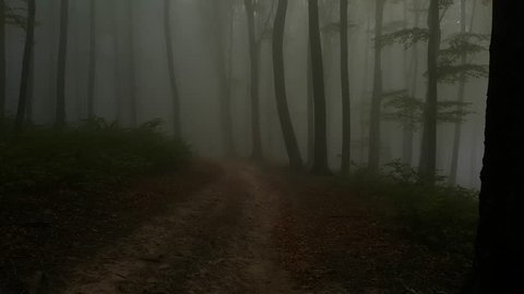 Morning walk in dark foggy forest