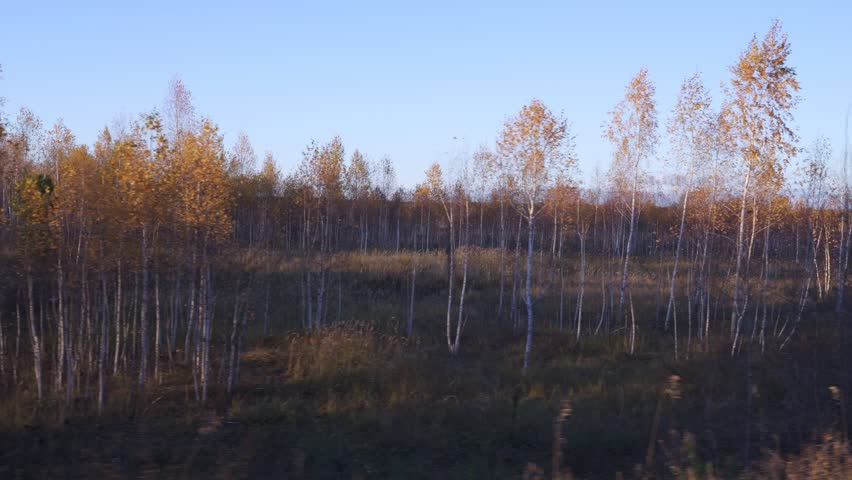 Video filming of the autumn forest from the window of a driving car or train. The camera moves past trees, bushes, grass covered with yellow and red leaves. Autumn evening sun beautifully illuminates
