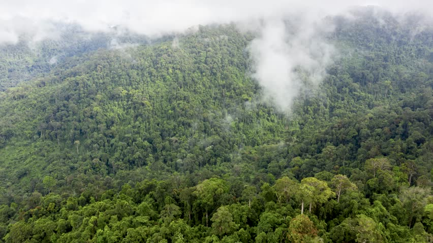 Aerial hyperlapse of clouds forming and evaporating above a dense tropical rainforest | Shutterstock HD Video #1018407799