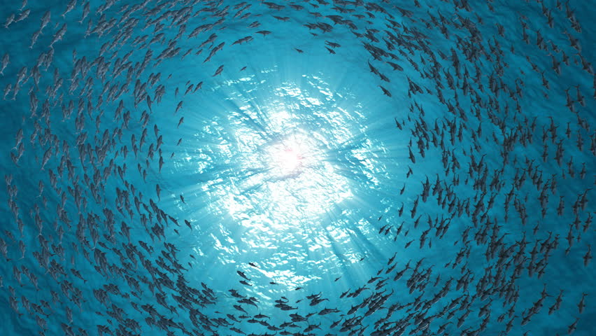 School Of Fish.Sharks swim in a circle.