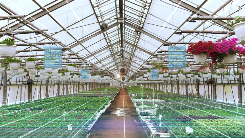 Futuristic Concept of: Industrial Greenhouse with Rows of Flowers and Plants Being Digitally Analyzed by Artificial Intelligence for Optimal Growth. Animated Visualization with Infographics.
