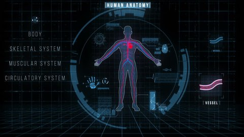 Futuristic Interface of Human Anatomy Systems. The motion graphics video represents male body shape, skeleton, muscles, circulatory, nervous systems, internal organs, organs icons, high tech elements.