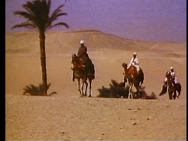 CAIRO, EGYPT, 1977, Camels on the desert, Arab drivers, three on desert