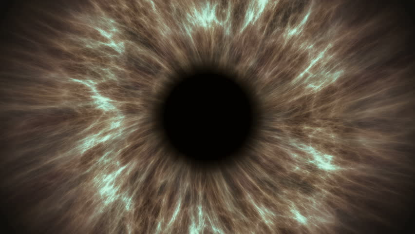 Brown human eye dilating and contracting. Very detailed extreme close-up of iris and pupil. | Shutterstock HD Video #1019446339