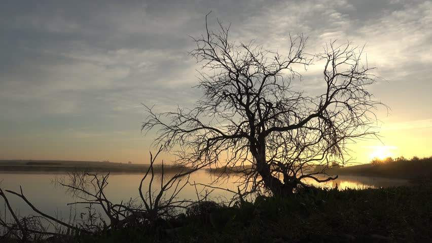Tree at dawn next to the guadiana in daimiel | Shutterstock HD Video #1019474989