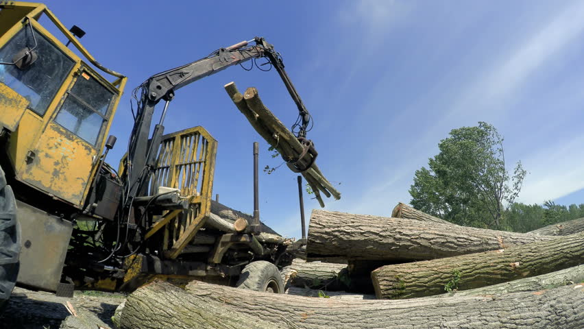 Logging Machine in Operation  Wood Stock Footage Video (100% Royalty-free)  1019518999 | Shutterstock
