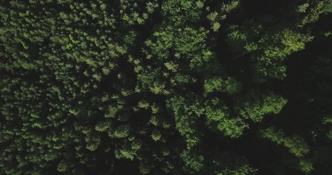 Aerial hawk-eye view of a massive remote, untouched forest