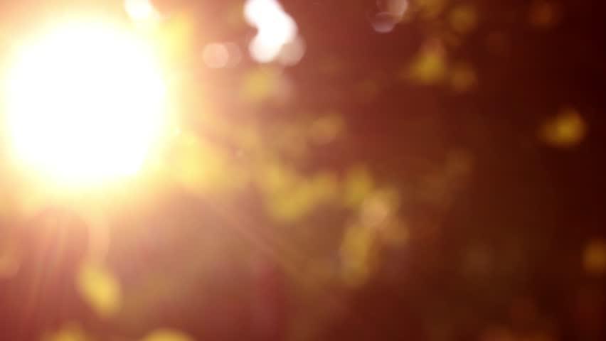 Defocus, nature background. | Shutterstock HD Video #1020894049