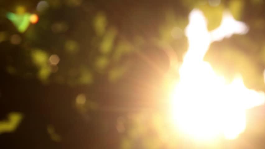 Defocus, nature background. | Shutterstock HD Video #1020894079