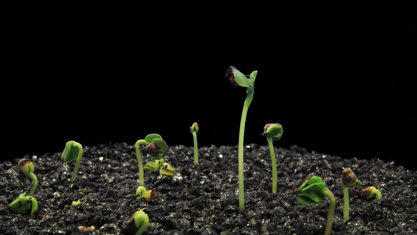 Seeds Growing HD Stock Video - Free HD Video Clips & Stock