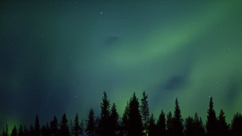 mysterious dancing aurora over a northern forest
