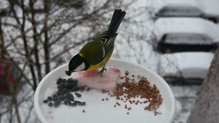 Titmouses are eaten from a feeding trough in snowfall. | Shutterstock HD Video #1021923739
