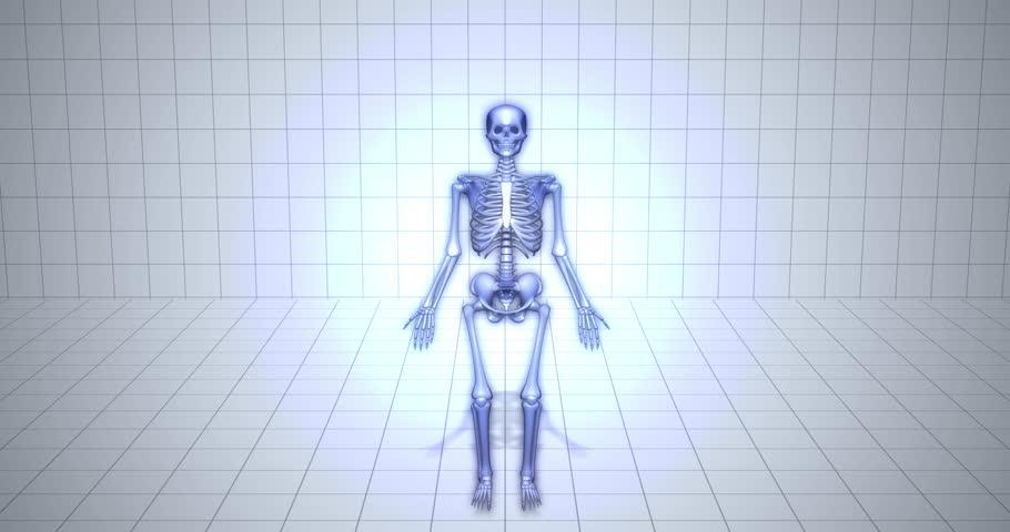 Visualization Skeleton medical animation -Patella Bone | Shutterstock HD Video #1021935529
