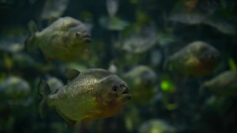 Aquarium With Ugly Fish Stock Footage Video 100 Royalty Free