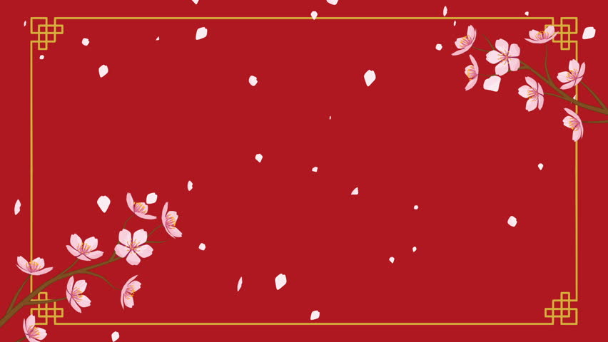 Growing Chinese styled line frame and Blooming Cherry blossom motion graphics with falling petals - Red color background