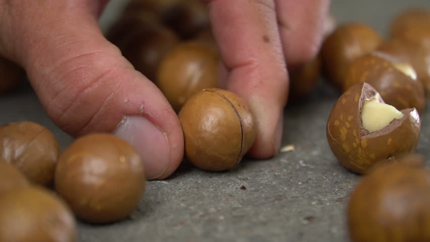 Roasted macadamias on table, selective focus and toned image. Healthy food concept, free space for text. | Shutterstock HD Video #1022678479