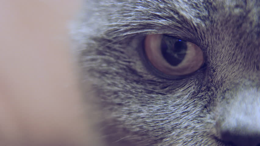 Cat eye extreme close-up, pet looking into camera, adoption, animal protection | Shutterstock HD Video #1022693719