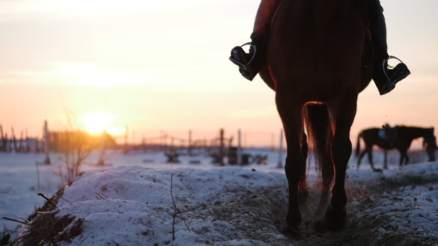 Horses With Riders Ride in the Aviary, Winter on The Street Against the Beautiful Sunset, Close-up. Beautiful Horse With Rider in Winter, Slow Movement. Shot on Steadicam.