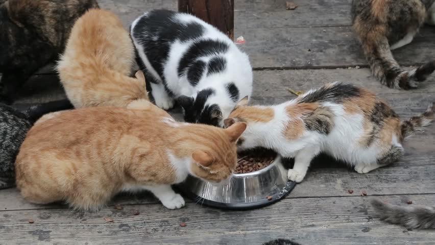 Cat feeding time | Shutterstock HD Video #1022991319