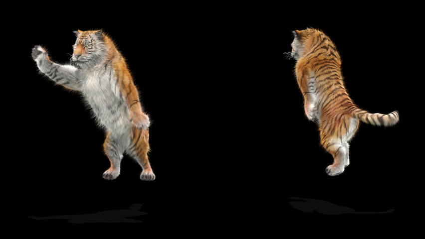 Tiger CG fur 3d rendering animal realistic CGI VFX Animation  Loop alpha dance composition 3d mapping
