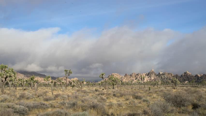 Beautiful landscape with Joshua tree, mountain, rocks at Joshua Tree National Park, California