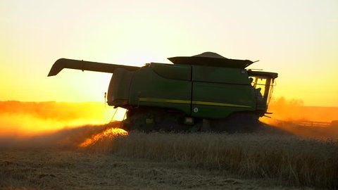Modern combine harvester gathers wheat crop in field at sunset. Combines working in field. Food industry. Harvest wheat field agribusiness agriculture crops rye barley farm farming farmer harvesting