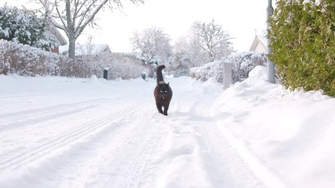 Cat walks in street with snow