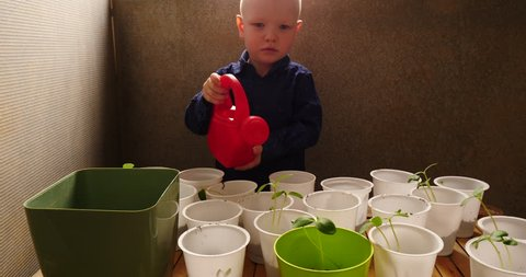 Little blond boy helps his mother grow tomato, eggplant, pepper, cabbage seedlings. Child with glasses watering pots with seedlings from a red garden watering can. Green seedlings on window