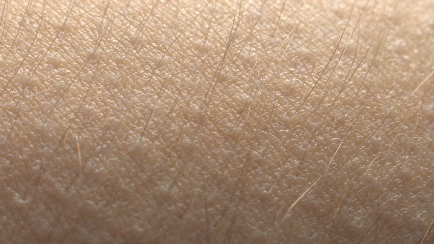 Goosebumps macro. Hair on the hand rise up. Skin reaction to cold, fear, or good music. Horripilation on skin.    Shutterstock HD Video #1024191929