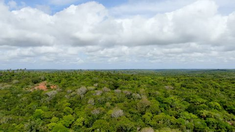 Aerial view of tropical forest, jungle in Praia Do Forte, Brazil.  Detailed aerial view of a forest supporting lush ferns and palms trees. mountain ranges and hills covered by evergreen rain forest