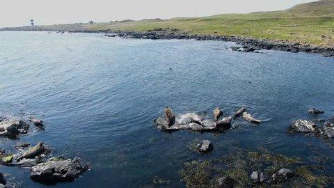 Seals laying on rocks at Rue point Rathlin Island Aerial photo Atlantic Ocean Co. Antrim N. Ireland