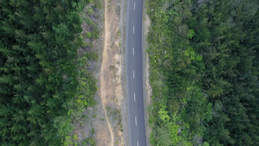 Aerial flying over a winding road & renewable pine forest  #1024381079